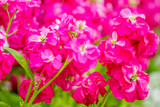 beautiful garden flowers, fresh colorful flowers