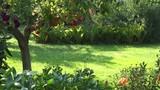 Male gardener mowing grass between flowers and fruit trees in garden backyard. 4K