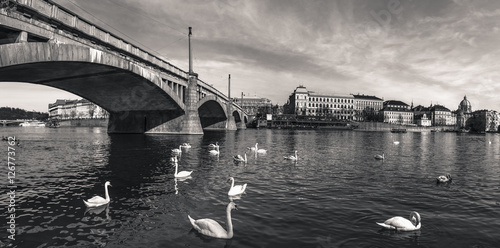 Poster Vintage panorama of Prague city - Monochrome image with an old bridge crossing the Vltava river, swans swimming on its water and historical buildings of Prague, the capital of Czech Republic