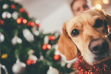 Fototapety Dog sitting by the christmas tree