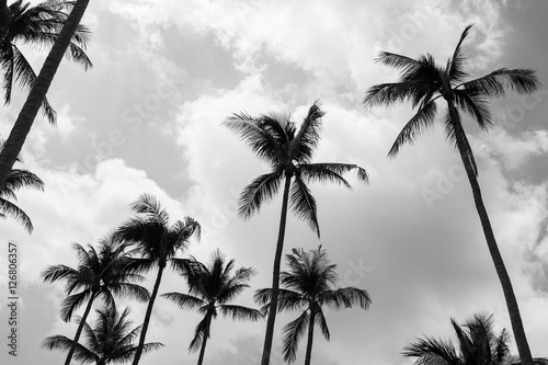 Palm trees (Black and white) - 126806357
