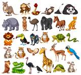 Different types of wild animals on white