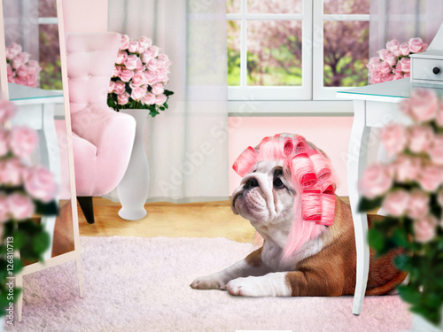 Poster Glamour Dog in pink curlers in the ladies room