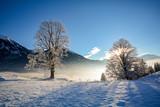 Fototapety Traumhafte Winterlandschaft mit verschneiten Bäumen in den österreichischen Alpen bei Salzburg
