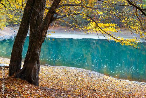 Göl kenarında ağaç Poster