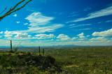 Desert Cactus, Saguarro National Park East, Arizona
