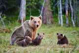 Female brown bear and her cubs - 126884174