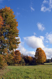 Clouds  over yellow maple trees on autumn day