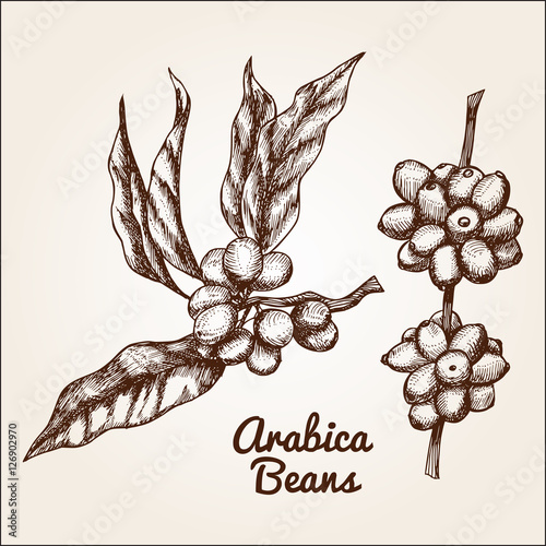 Hand drawn arabica beans