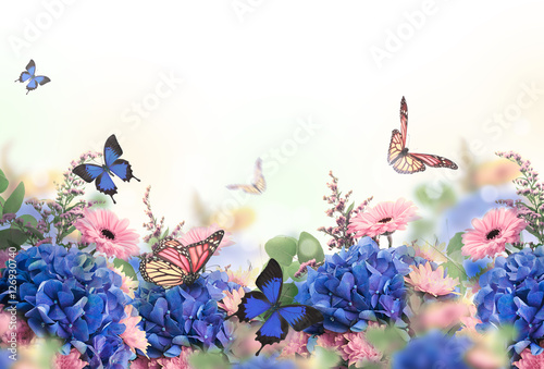 Amazing background with hydrangeas and daisies. Yellow and blue flowers on a white blank. Floral card nature. bokeh butterflies. - 126930740
