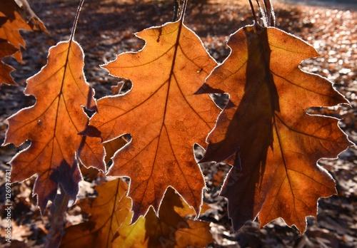 Poster Oranje eclat Herbstblätter gefrostet
