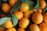 Frutti del mandarino