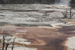 Постер, плакат: mammoth hot springs