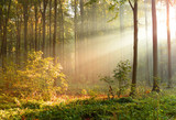 Fototapety Beautiful morning in the forest