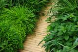 Chemin de bois dans un jardin