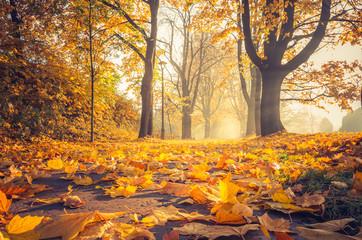 Fallen leaves, autumn colorful park alley in Krakow, Poland