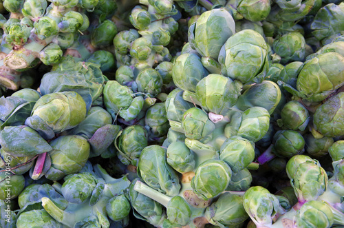 Keuken foto achterwand Brussel Fresh picked brussel sprouts on stalks