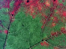 Liście w jesiennym sezonie kolorów