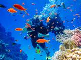 Активный отдых. Дайвинг у коралловых рифов - 127024300