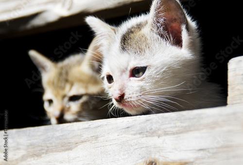 Poster adorable playful kitten