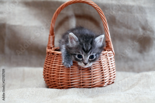 Poster Kitty In Basket