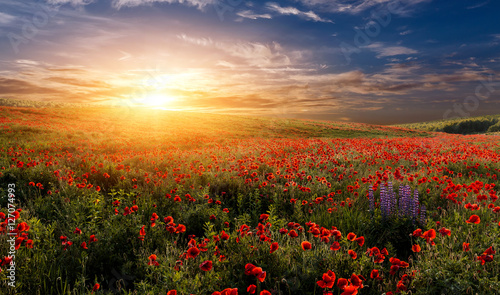 fantastic sunset at the poppies meadow. majestic rural landskape. colorful sky with overcast clouds. picturesque scene. amazing view - 127074993