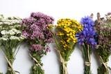 Herbs. Natural medicine.