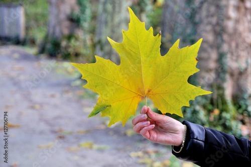 Poster Grande feuille d'érable en automne