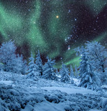 Aurora over frozen woods