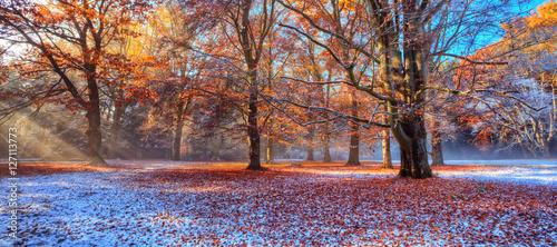 Fototapety, obrazy : Morning sunrays in winter forest