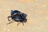 Bugs - 127115523