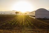 agricoltura biologica in Italia