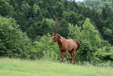 北海道の馬