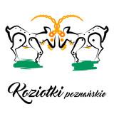 Koziołki poznańskie - 127131778