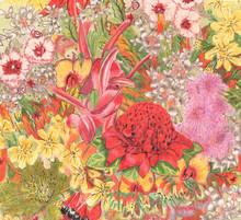 Fleurs sauvages. indigènes australiens. Colorfu dessin au crayon.