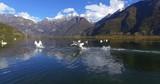 Aerial 4k - Riserva Naturale di Pian di Spagna - Lago di Novate Mezzola - Cigni