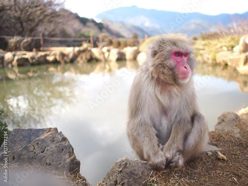 Plagát, Obraz くつろぐ猿