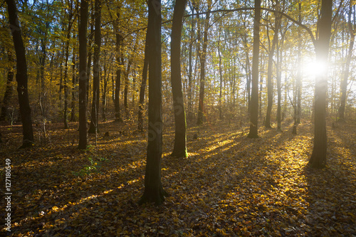 Fotobehang Bos in mist Romantic morning in forest of the beech tree. Early morning fros