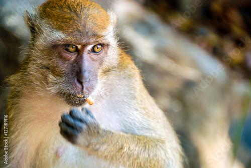 Plagát, Obraz Affe beim Essen