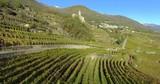 Aerial 4k - Sondrio - Valtellina (IT) - Panoramica dei vigneti del Grumello