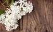 White lilac flowers lying on an old vintage wooden surface