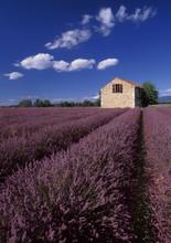 champs de lavande Provence France