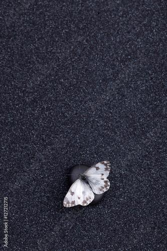 Foto op Canvas Zen A garden butterfly in a zen garden with a black sand