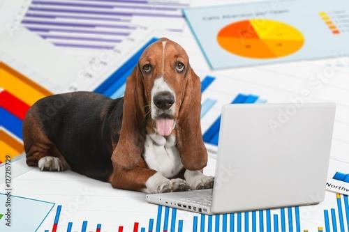 Poster Dog.