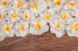 Spring daffodils flowers on wood surface