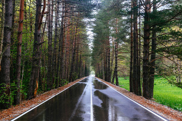 the wet Forest road