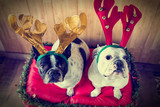 Dogs dressed for Christmas
