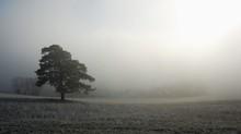 solitaire arbre debout dans une prairie gelée