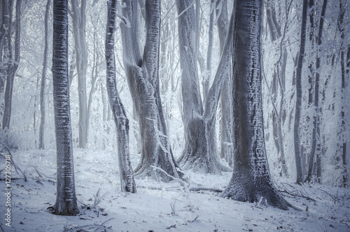 frozen trees in misty winter forest Poster