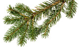 Christmas tree. fir tree. - 127309385